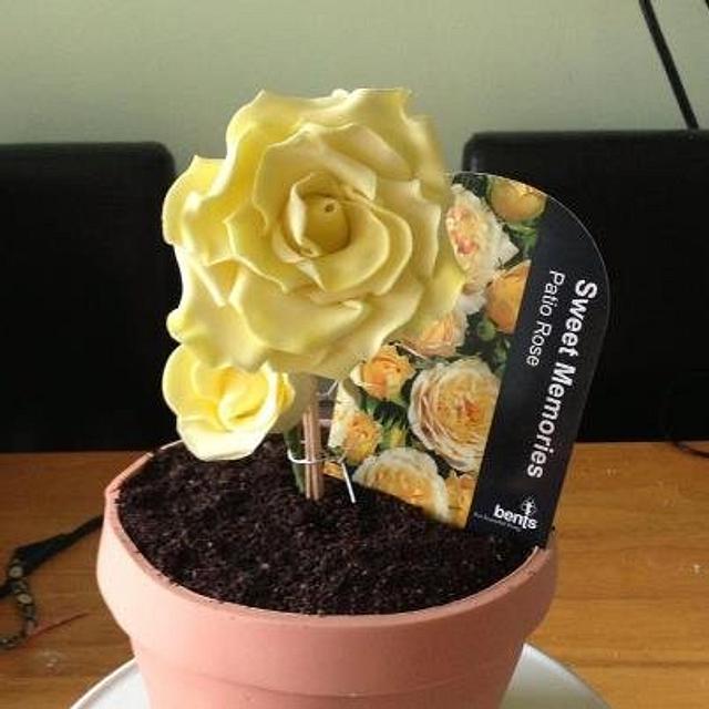 Sweet Memories Rose Cake