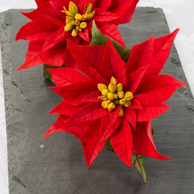 Flower Paste Poinsettias