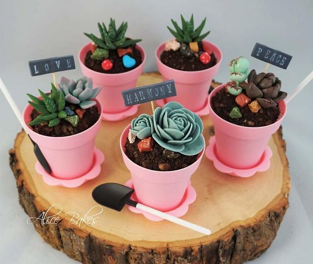 Succulent Pot Cupcakes