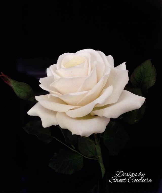 White sugar rose.