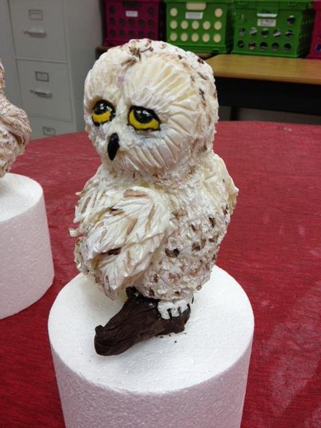 Modeling Chocolate Snowy Owl