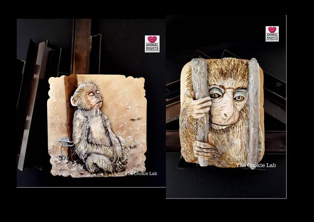 Animal Rights Collaboration - Monkey