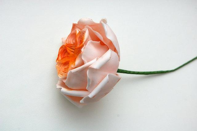 english cabbage rose