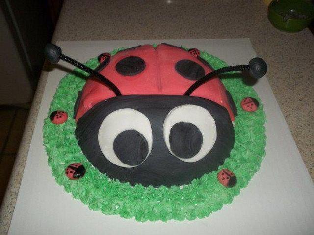 Lovely lady bug!