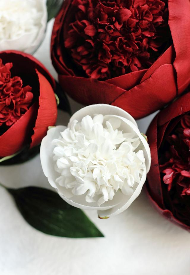RED&WHITE CHARM PEONIES