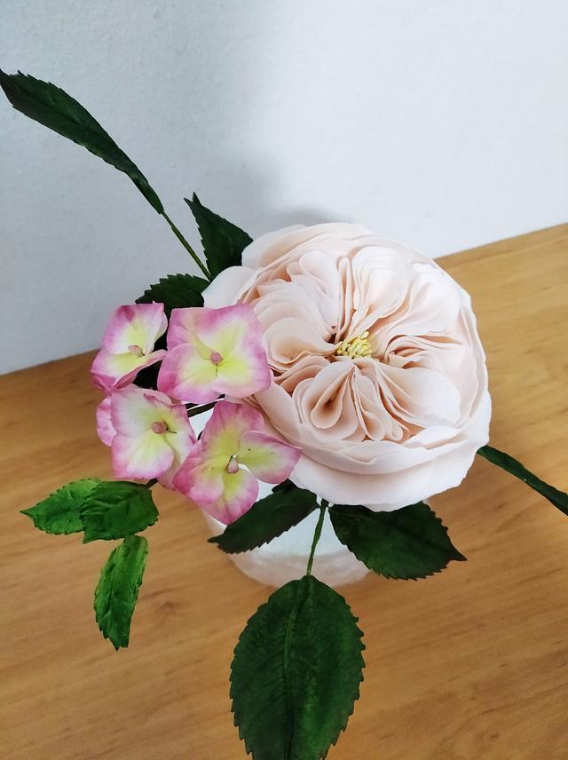 Sugar rose and hydrangea