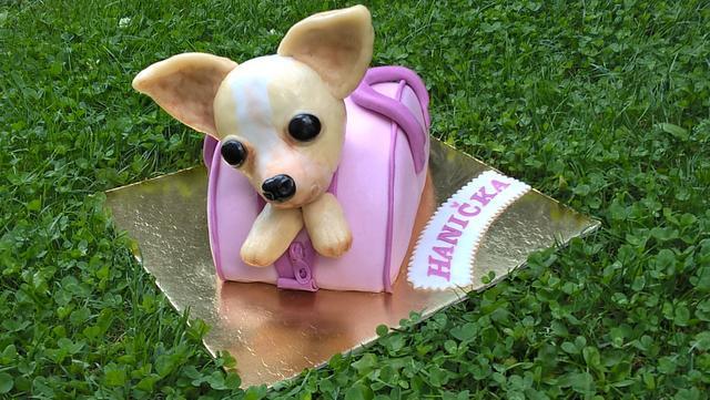 Cute Chihuahua in a ping bag