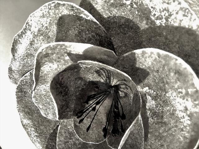Stone rose (work in progress...)