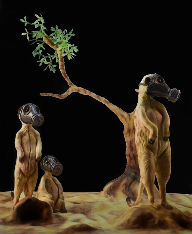 ANIMAL RIGHTS COLLABORATION