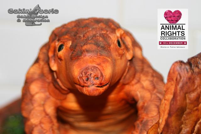 Animal Rights Collaboration - Asian Pangolin