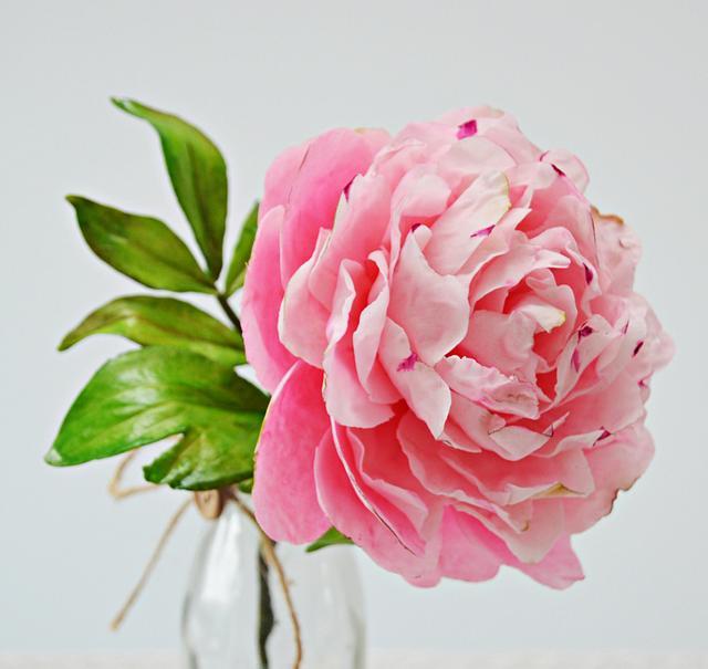 Freeformed Sugar  Pink Peony- garden beauty