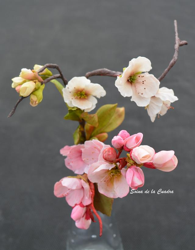 Flower Paste Blossoms