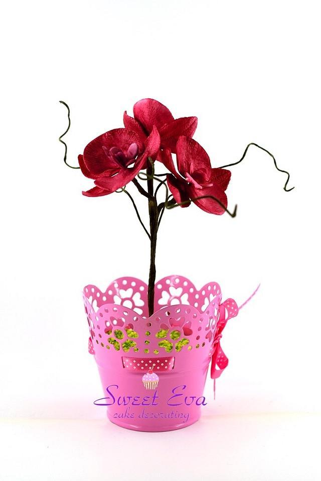 orchid sugar