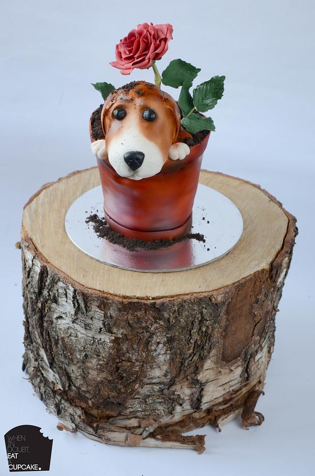 Beagle in a rose plant pot!
