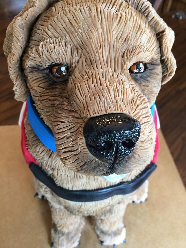 Bob the Service Dog