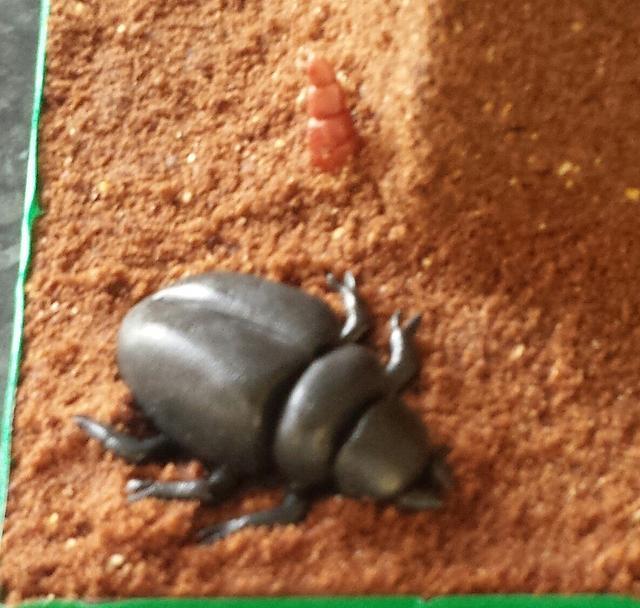Bug cake