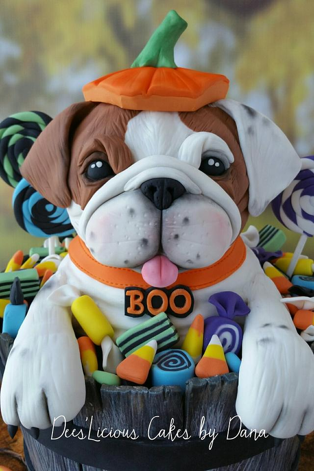 BOO the bulldog pup