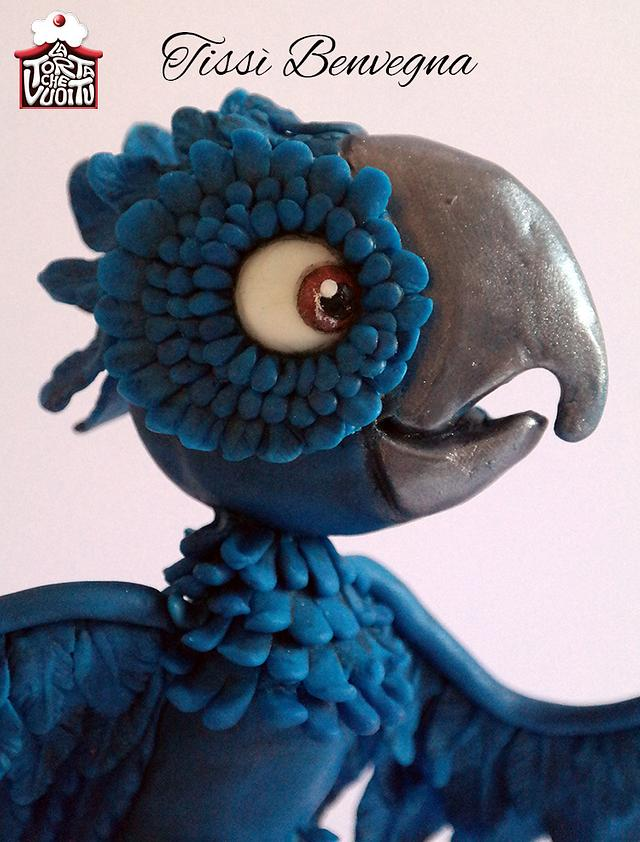 Macaw - Animal Rights Collaboration