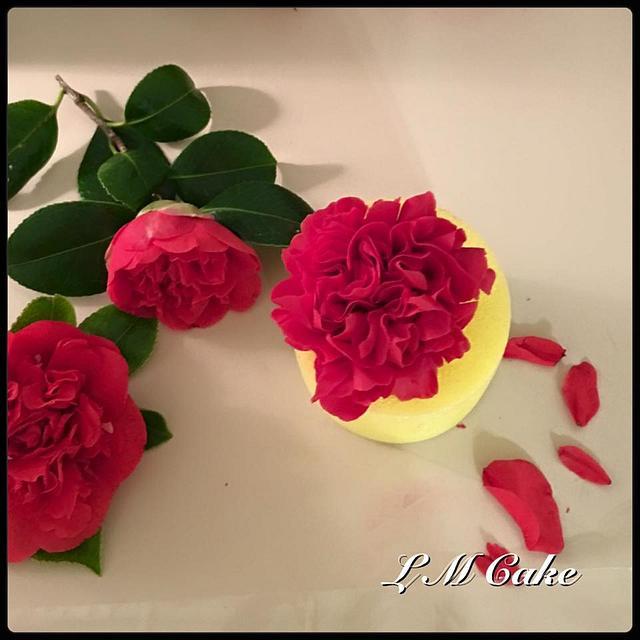 Sugar Camellia for Grandma