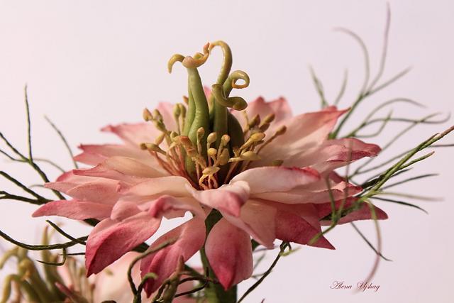 nigella flower