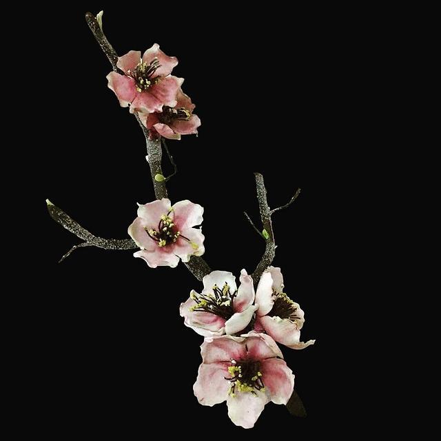 Sakura (Cherry Blossoms)