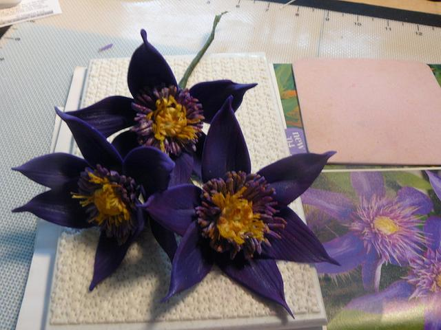 clematis flowers , w/photo ! first try