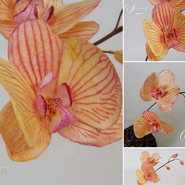 Moth Orchid in Autumn colors