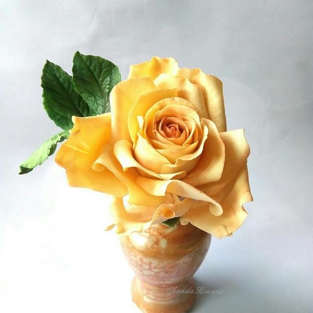 Sugar Rose