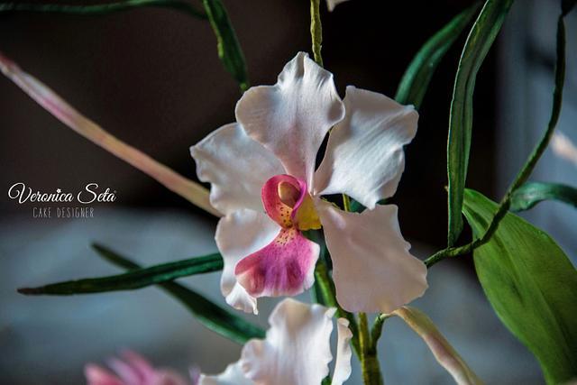 Josephine Orchids