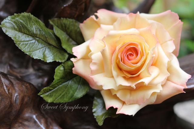 Rose -2