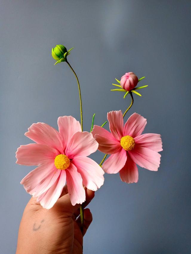 Sugar Cosmos flowers
