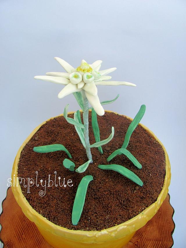 Edelweiss in pot cake