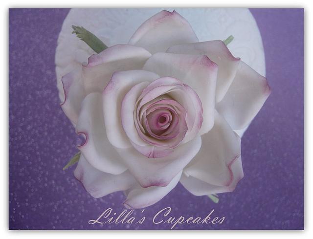 My Rose