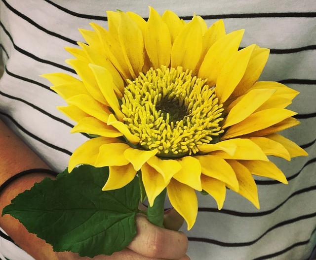 Sunny Sunflower!