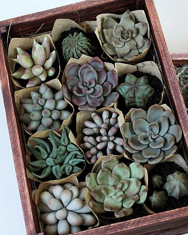 Realistic Succulent Cupcakes by Maria Magrat