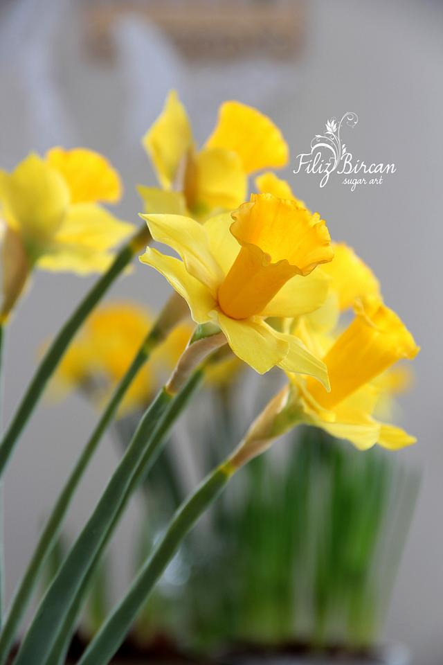 Sugar Flowers (Sugar  Daffodil)