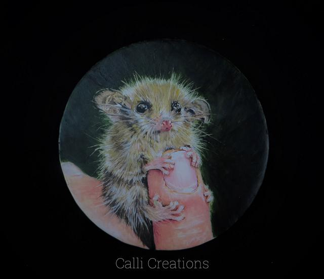 Pigmy Possum Painting Class