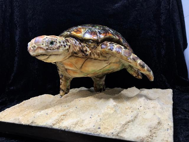 Sculpted turtle cake
