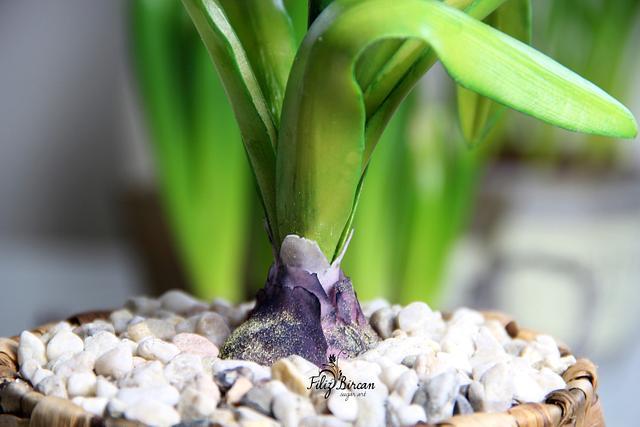 Sugar Flowers (Sugar Hyacinth)