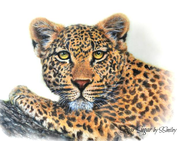 Leopard (Spectacular Pakistan Collaboration)