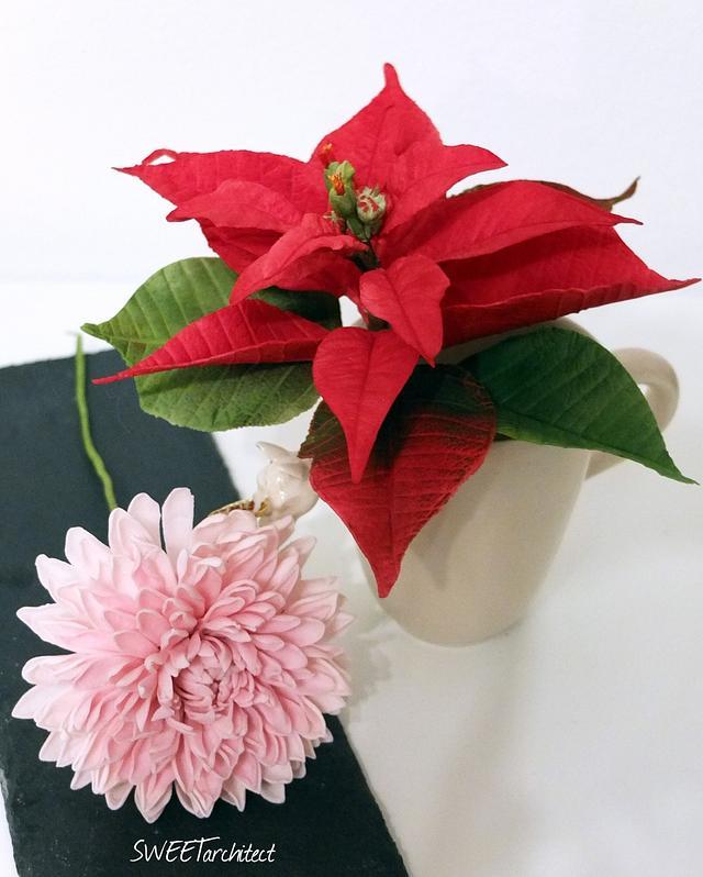 Sugar poinsettia and chrysanthemum