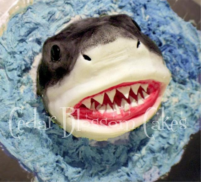 White pointer cake or Carcharodon carcharias ccccake