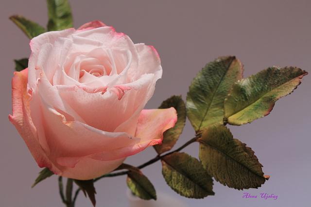 rose))