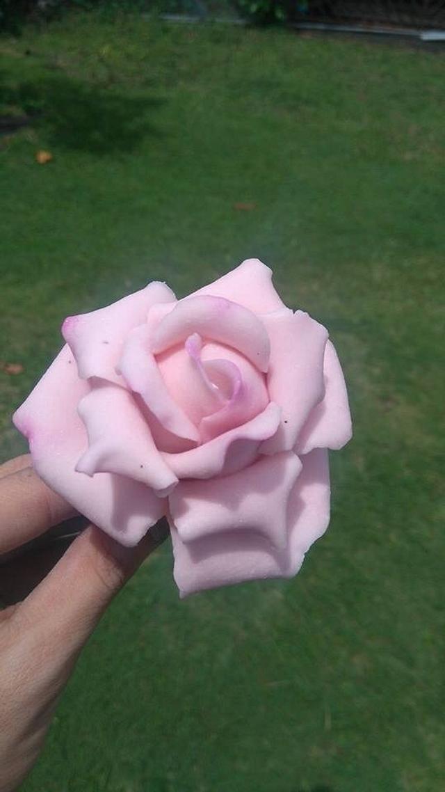 Blush Pink Sugar Rose