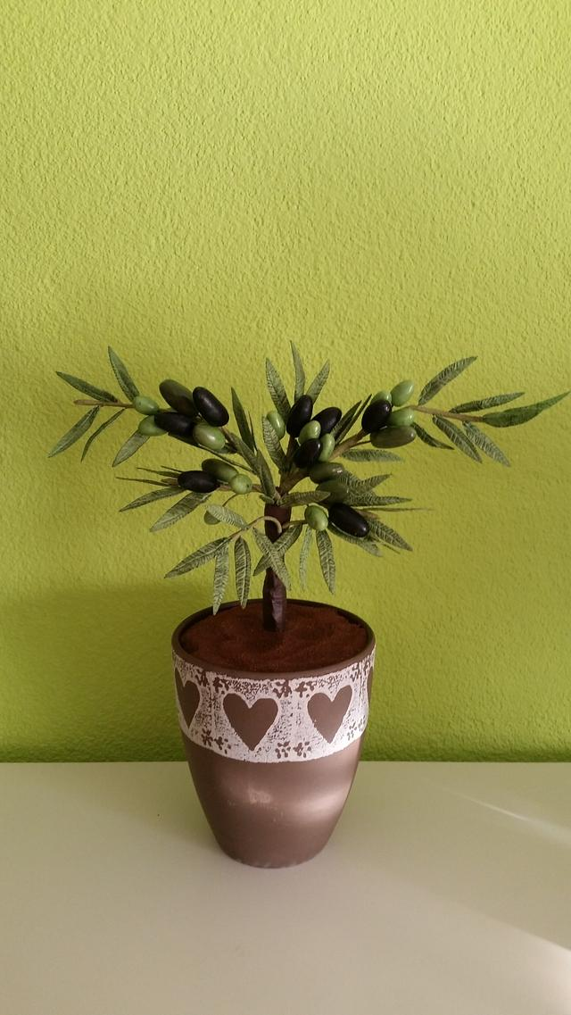 A little Olive-Tree...