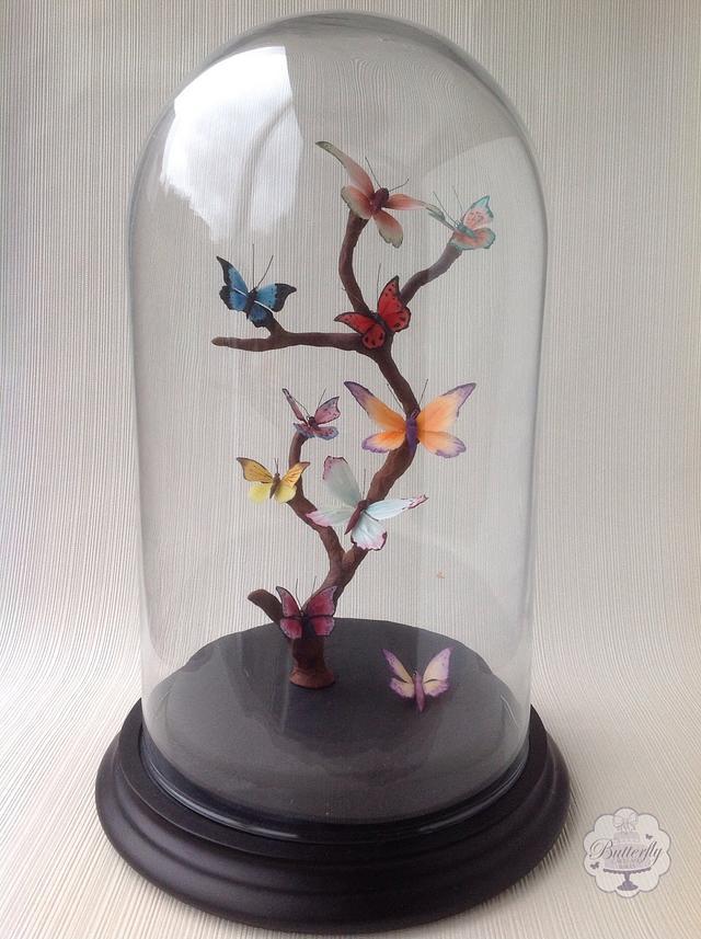 Butterfly Curiosities