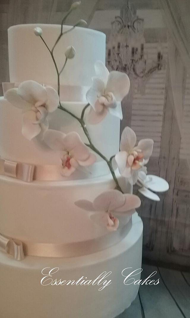 Simple Orchid