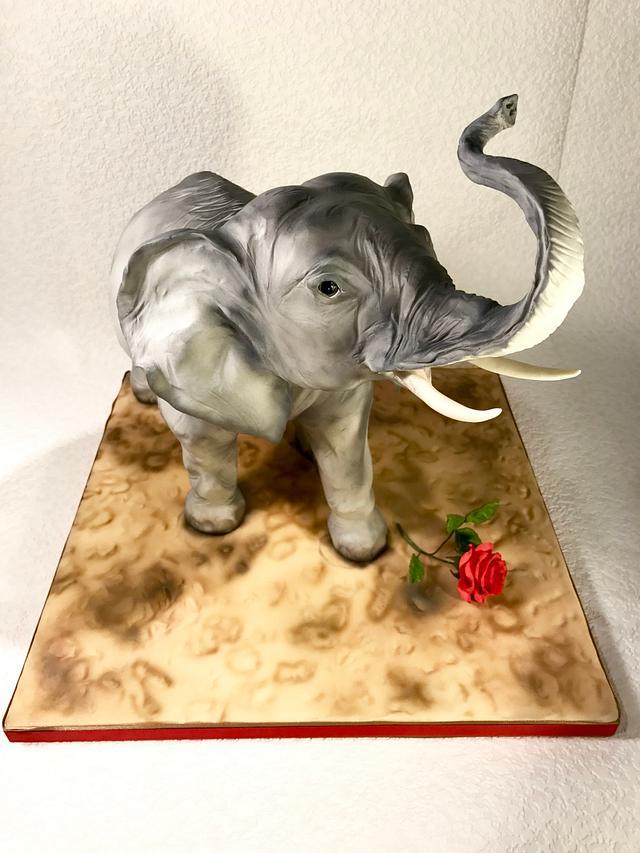 Elephant love❤