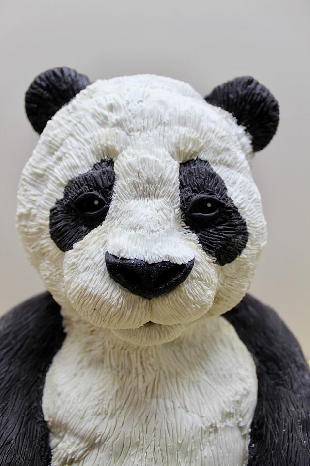NCACS 2018- Panda