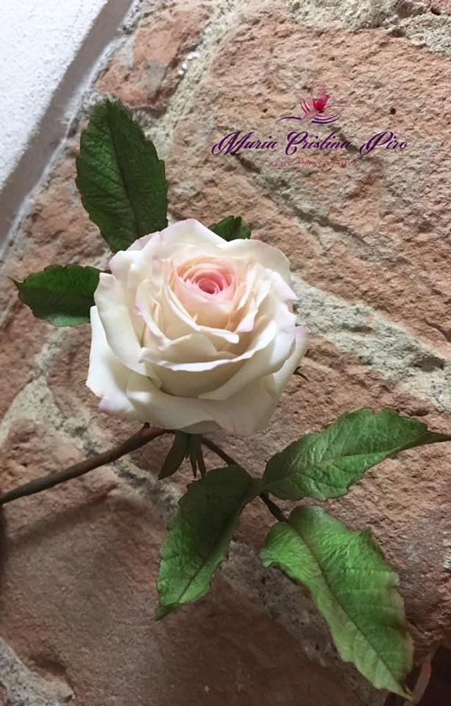 Rose...Return of spring
